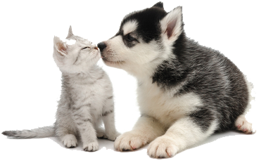 Puppy kissing kitten